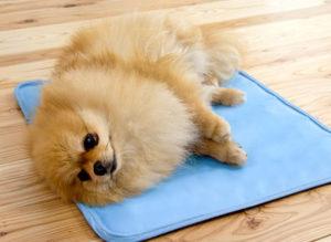 ペットの寝どこにも使えるひんやりマット